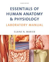 Human Physiology And Anatomy Pdf Marieb Essentials Of Human Anatomy U0026 Physiology Laboratory Manual