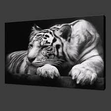 white tiger on black modern picture wall art canvas prints home
