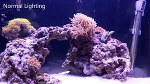 led reef lighting reviews orbit marine led light by current special effects 2 0 youtube