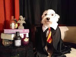 australian shepherd quiz dog quiz which pup is your harry potter spirit animal