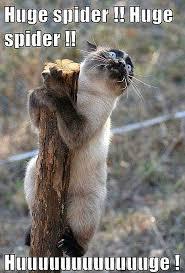 Best 25 Spider Meme Ideas - cat scared of spider memes gun safety