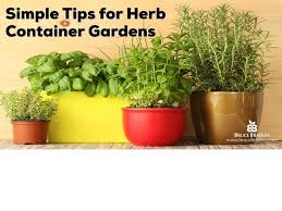 Simple Tips From Planting Harvesting And Storing Herbs From