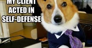 Business Cat Memes - dueling memes lawyer dog vs business cat