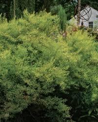 Garden Shrubs Ideas The Only Shrubs You Need To Grow Finegardening