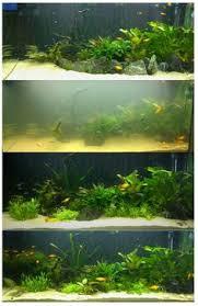 weeping moss vesicularia ferriei aquatic plants garden floats