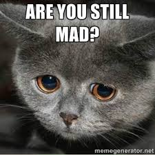 U Still Mad Meme - mad cat meme the best cat 2017