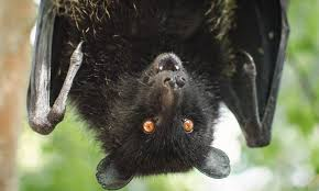 could a fungus cause the extinction of bats howstuffworks