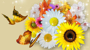 butterflies tag wallpapers page 4 flowers cool four pretty