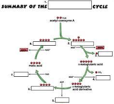 cellular respiration diagram cellular respiration review
