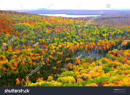 carpet bright colored trees michigan stock photo 4874779
