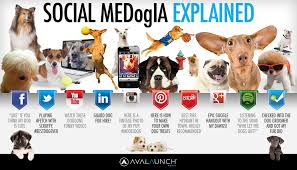 social media explained by dogs