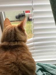 i kept forgetting to raise the blinds on my cat u0027s favorite window