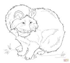 raccoon dog coloring pages free coloring pages