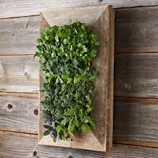 Outdoor Wall Hanging Planters by 28 Wall Garden Planter Green Wall In Pots And Planters