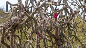 right in your backyard foraging for food in the sonoran desert azpm
