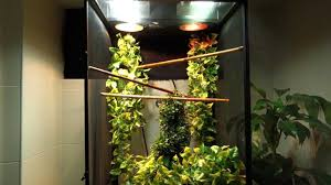 Zoo Med Lighting by Panther Chameleon Setup Exoterra Rs400 Zoo Med Reptibreeze