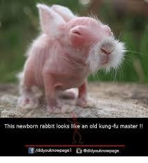 Meme Kung Fu - 25 best memes about kung fu master kung fu master memes