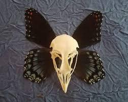 skulls butterflies etsy