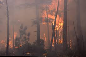 Wildfire Viewer by File Wildfire In The Pacific Northwest 8776249150 Jpg