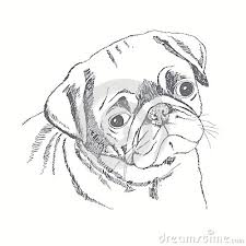 drawn face pug pencil and in color drawn face pug
