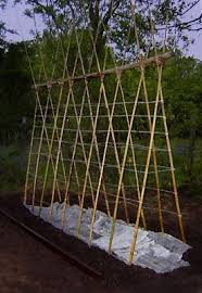 How To Make Trellis For Peas Best 25 Bean Trellis Ideas On Pinterest Pea Trellis Pole Beans