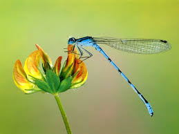 cute fall background wallpaper dragonfly tag wallpapers cute dragonfly tarlac city golden macro