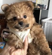 Meme Teddy Bear - put me like i bought a real life teddy bear