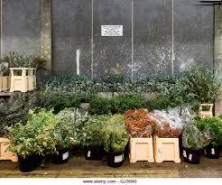 new covent garden flower market stock photos u0026 new covent garden