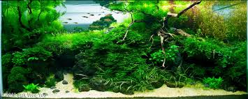 aquascape examples aquascapers