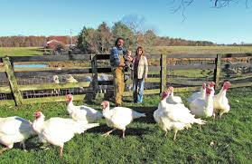 thanksgiving abbreviation pasture raised turkeys ready for thanksgiving tables news