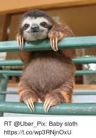 Sloth Fitness Meme - 25 best memes about i love you sloth i love you sloth memes
