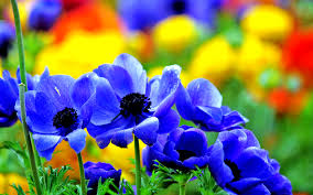 Nice Flower Picture - blue flowers 547146 flowers photography wallpapers blue flower