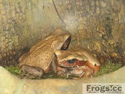 what do frogs eat learn what to feed your frogs