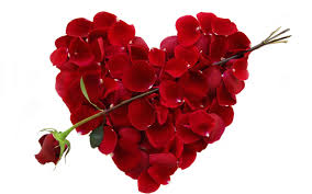 valentines day flowers rose cards love hearts candy happy