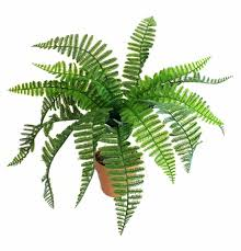 mini plants artificial mini fern plant at evergreen direct