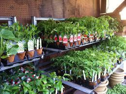 indoor vegetable gardening tips best idea garden