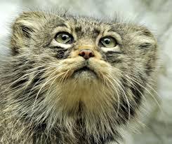 happy birthday amy international society for endangered cats