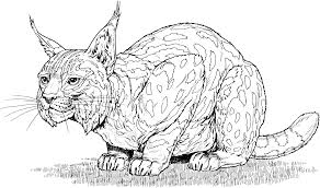 big cats coloring pages bestcameronhighlandsapartment