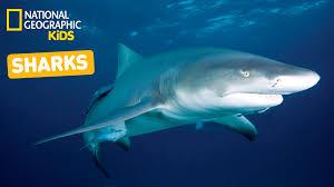 nat geo kids on youtube sharks playlist