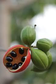 edible native australian plants top ten of the top end bush tuckers plant based u2013 tasteofthetopend