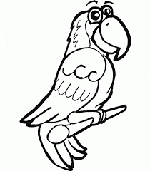 african grey parrot coloring animals town animals color