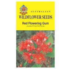 australian native plant seeds native u0026 wildflowers seeds our seed stand