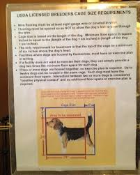 dog breeders no dog about it blog