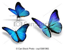 three blue butterfly isolated on white background stock