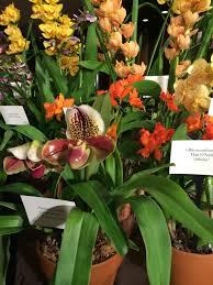 danielle rollins u0027 table for veranda magazine ny orchid show