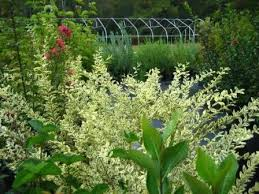 Landscape Nurseries Near Me by Triplants Wholesale Nursery In The Triangle And Triad Area