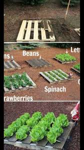 make pallet vegetable garden ideas your neighbors jealous with