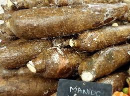 cuisiner le manioc dictionnaire de cuisine et gastronomie manioc