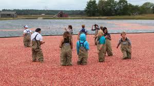 a bicentennial of berries it u0027s cranberry season again