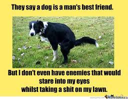 Border Collie Meme - dogs dogs dogs by kyoko meme center
